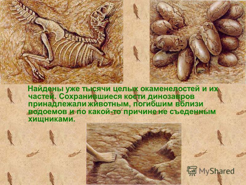 Найдены уже тысячи целых окаменелостей и их частей. Сохранившиеся кости динозавров принадлежали животным, погибшим вблизи водоемов и по какой-то причине не съеденным хищниками.