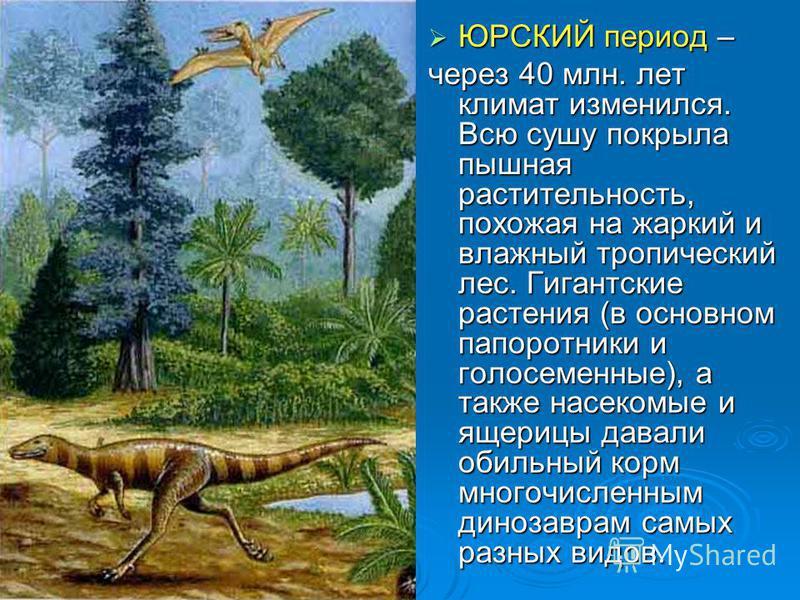 ЮРСКИЙ период – ЮРСКИЙ период – через 40 млн. лет климат изменился. Всю сушу покрыла пышная растительность, похожая на жаркий и влажный тропический лес. Гигантские растения (в основном папоротники и голосеменные), а также насекомые и ящерицы давали о