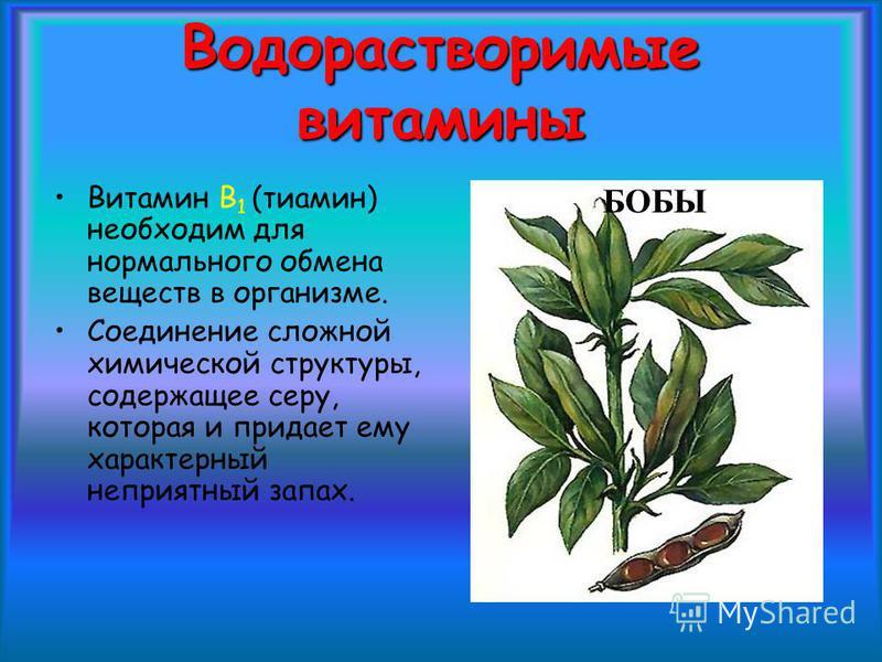 Водорастворимые витамины Витамин В 1 (тиамин) необходим для нормального обмена веществ в организме. Соединение сложной химической структуры, содержащее серу, которая и придает ему характерный неприятный запах. БОБЫ