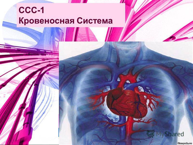 ССС-1 Кровеносная Система