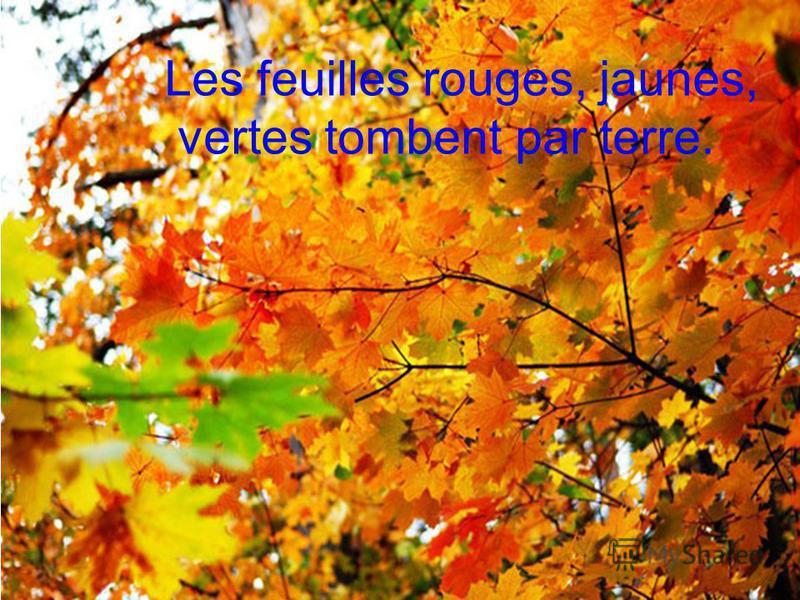 Les feuilles rouges, jaunes, vertes tombent par terre.