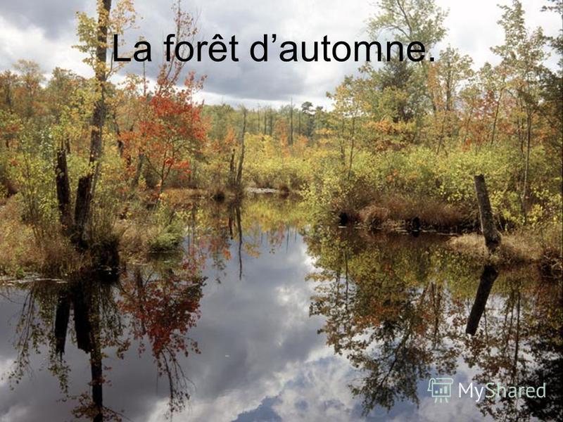 La forêt dautomne.