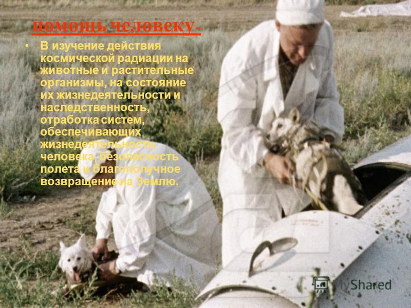 помощь человеку - В изучение действия космической радиации на животные и растительные организмы, на состояние их жизнедеятельности и наследственность, отработка систем, обеспечивающих жизнедеятельность человека, безопасность полета и благополучное во