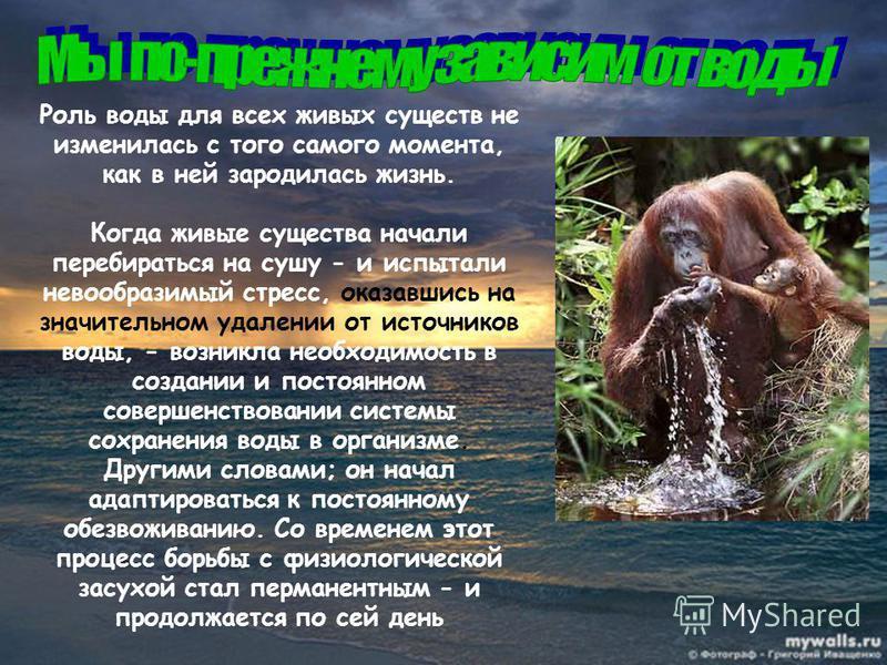 Роль воды для всех живых существ не изменилась с того самого момента, как в ней зародилась жизнь. Когда живые существа начали перебираться на сушу - и испытали невообразимый стресс, оказавшись на значительном удалении от источников воды, - возникла н