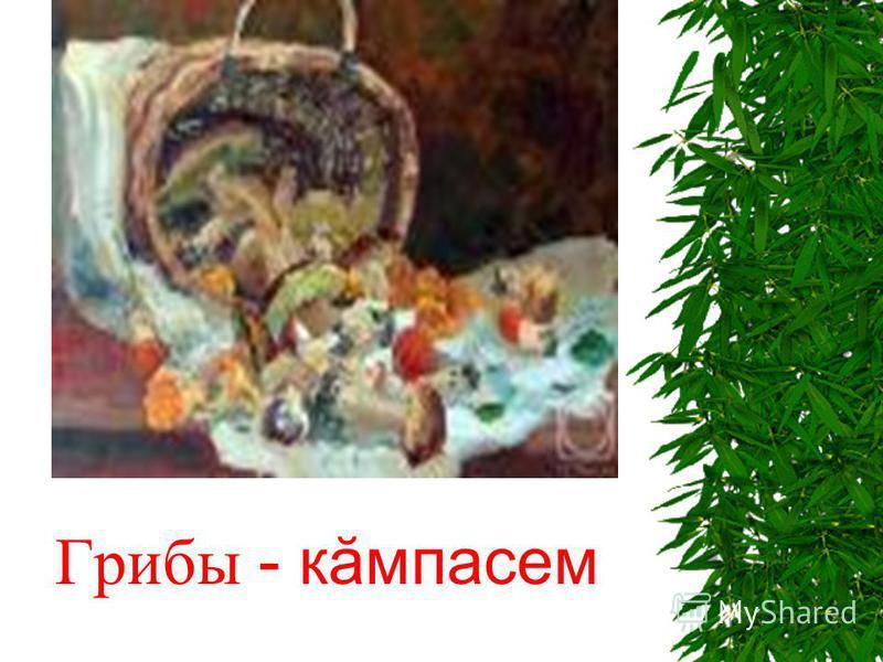 Грибы - кăмпасем