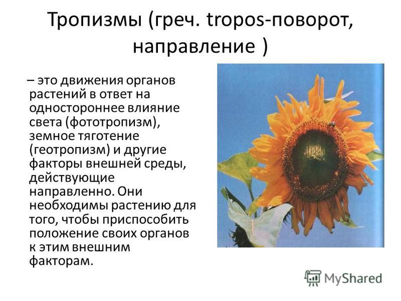 Тропизмы (греч. tropos-поворот, направление ) – это движения органов растений в ответ на одностороннее влияние света (фототропизм), земное тяготение (геотропизм) и другие факторы внешней среды, действующие направленно. Они необходимы растению для тог