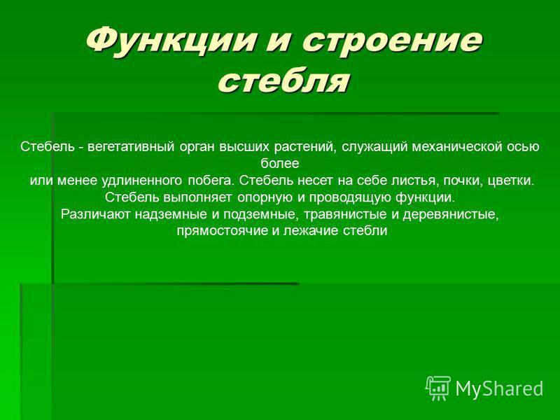 Презентация по теме строение стебля растения