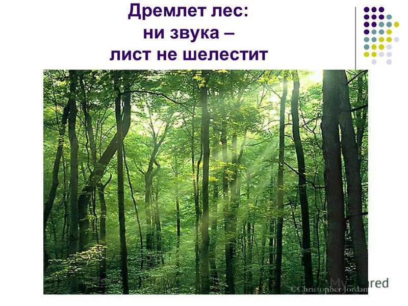 Дремлет лес: ни звука – лист не шелестит