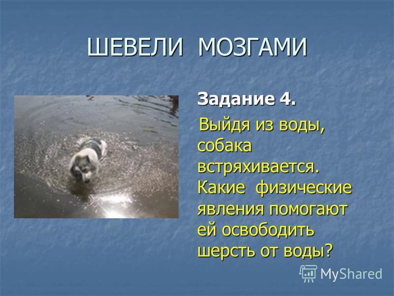 ШЕВЕЛИ МОЗГАМИ Задание 4. Задание 4. Выйдя из воды, собака встряхивается. Какие физические явления помогают ей освободить шерсть от воды? Выйдя из воды, собака встряхивается. Какие физические явления помогают ей освободить шерсть от воды?