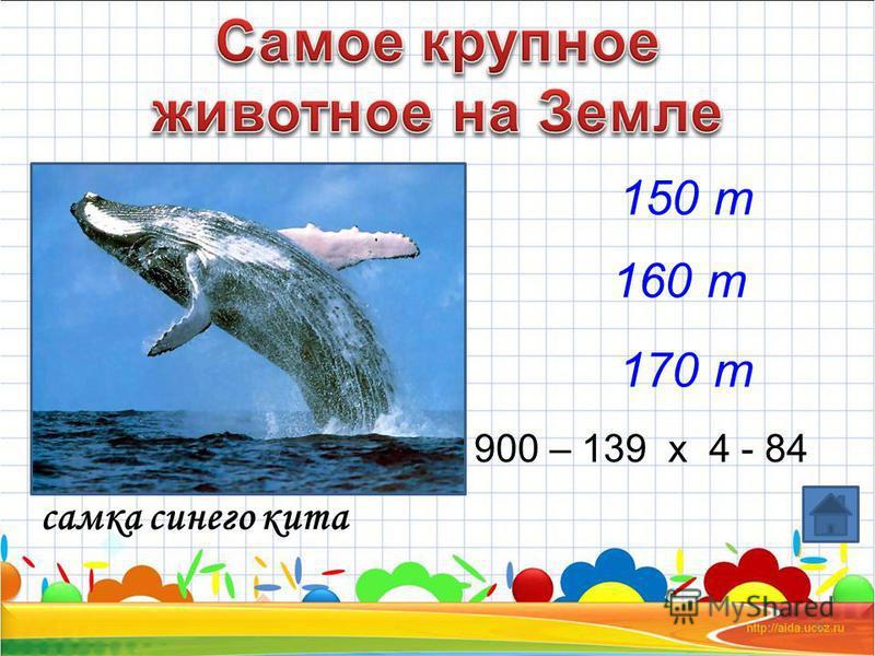 6 самка синего кита 900 – 139 x 4 - 84 150 т 160 т 170 т