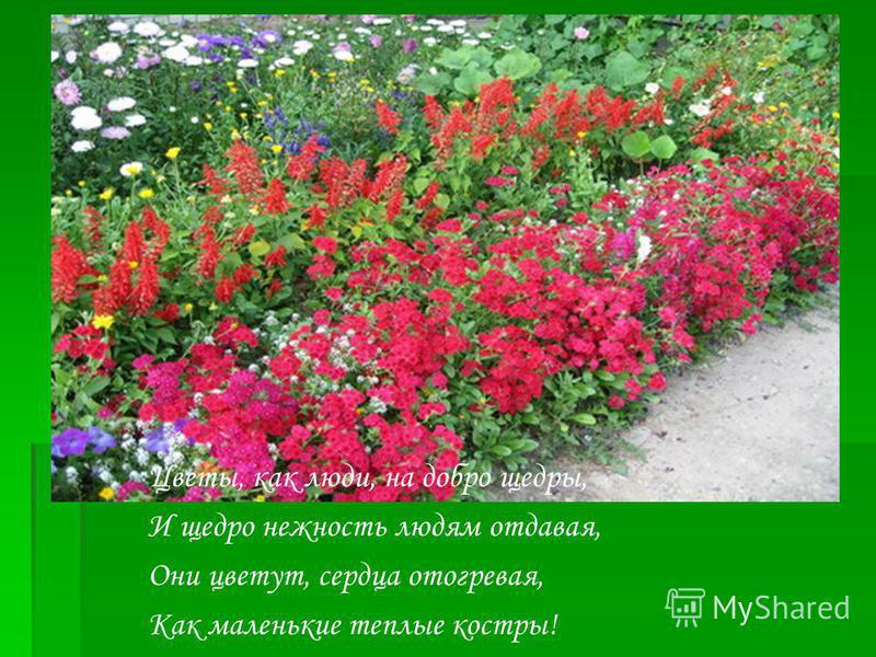 Цветы, как люди, на добро щедры, И щедро нежность людям отдавая, Они цветут, сердца отогревая, Как маленькие теплые костры!