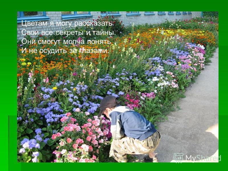 Цветам я могу рассказать Свои все секреты и тайны. Они смогут молча понять И не осудить за глазами.