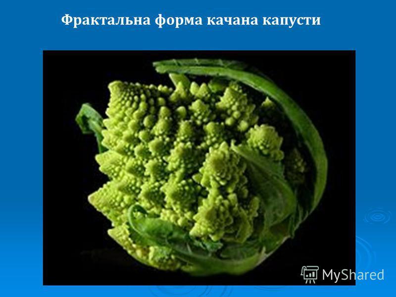 Фрактальна форма качана капусти