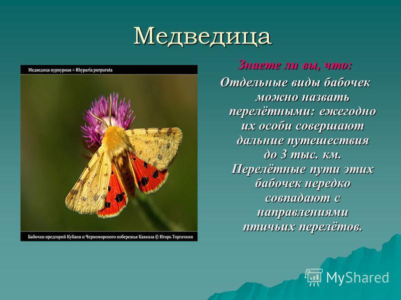 Медведица Знаете ли вы, что: Отдельные виды бабочек можно назвать перелётными: ежегодно их особи совершают дальние путешествия до 3 тыс. км. Перелётные пути этих бабочек нередко совпадают с направлениями птичьих перелётов.