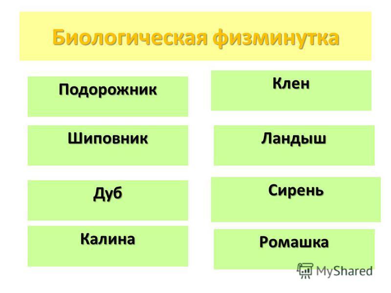 Биологическая физминутка Сирень Калина Клен Шиповник Дуб Ромашка Подорожник Ландыш
