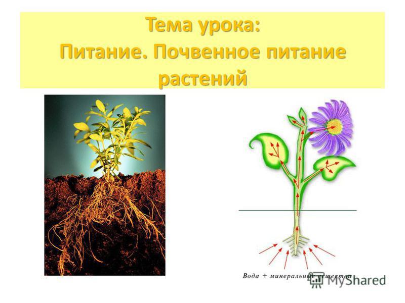 Тема урока: Питание. Почвенное питание растений