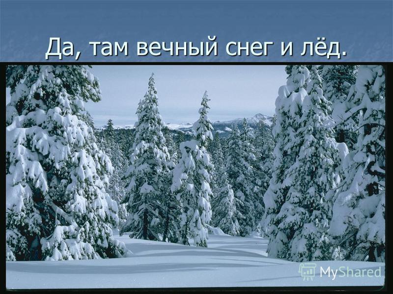 Да, там вечный снег и лёд.