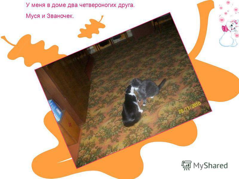 У меня в доме два четвероногих друга. Муся и Званочек.