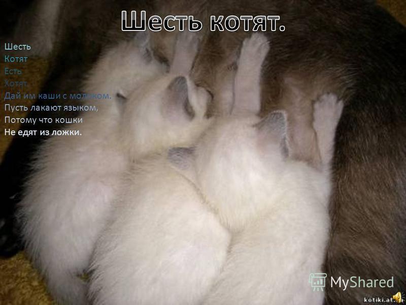 Шесть Котят Есть Хотят. Дай им каши с молоком. Пусть лакают языком, Потому что кошки Не едят из ложки.