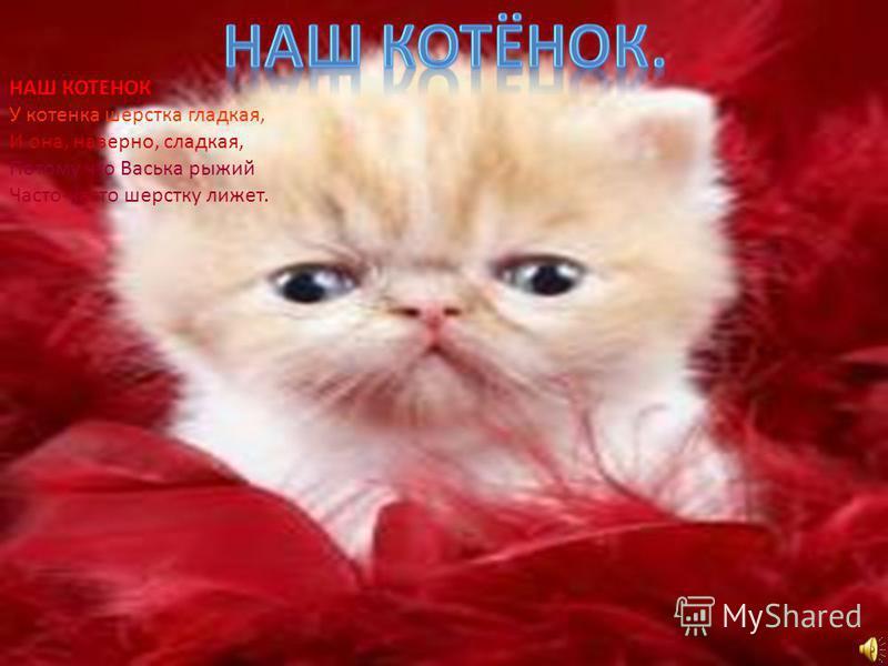 НАШ КОТЕНОК У котенка шерстка гладкая, И она, наверно, сладкая, Потому что Васька рыжий Часто-часто шерстку лижет.