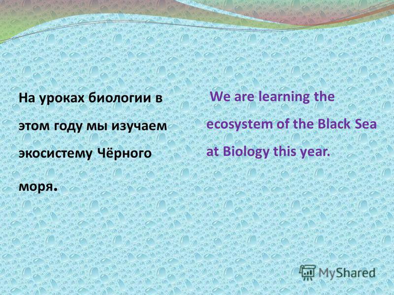 We are learning the ecosystem of the Black Sea at Biology this year. На уроках биологии в этом году мы изучаем экосистему Чёрного моря.