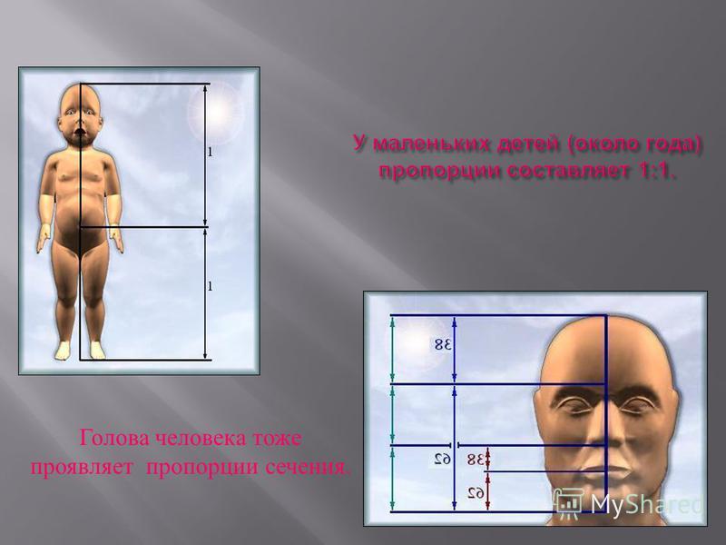 Золотое сечение в анатомии человеческого тела Сечение выражает среднестатистический закон : деление тела точкой пупа-один из основных показателей золотого сечения. Немецкий профессор Цейзинг в середине 18 столетия проделал огромную работу : он измери