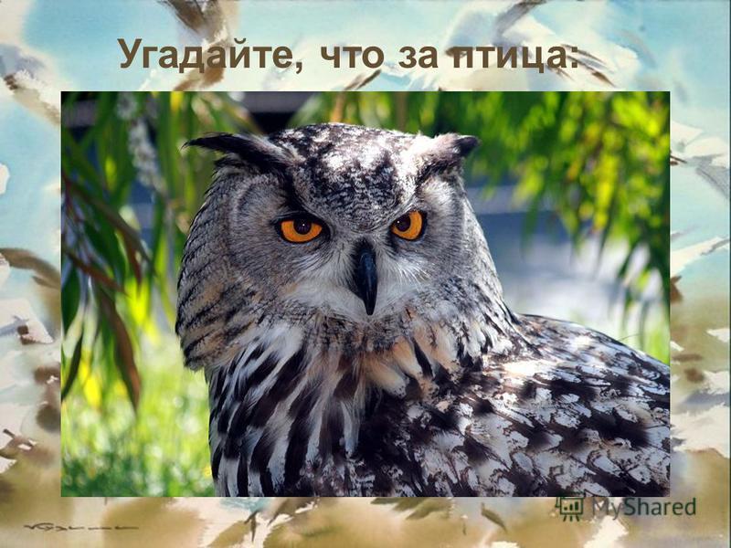 Угадайте, что за птица: Днем спит, ночью летает И прохожих пугает.