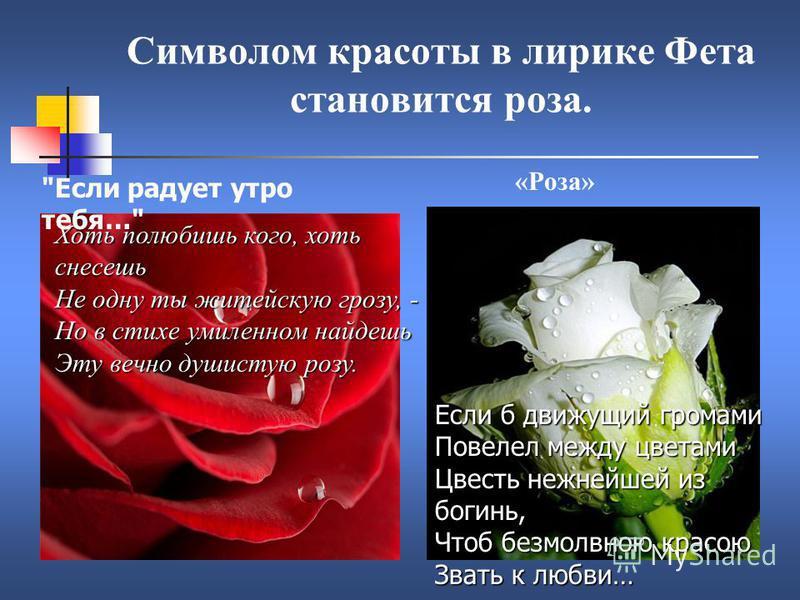 Символом красоты в лирике Фета становится роза. Хоть полюбишь кого, хоть снесешь Не одну ты житейскую грозу, - Но в стихе умиленном найдешь Эту вечно душистую розу. Если б движущий громами Повелел между цветами Цвесть нежнейшей из богинь, Чтоб безмол