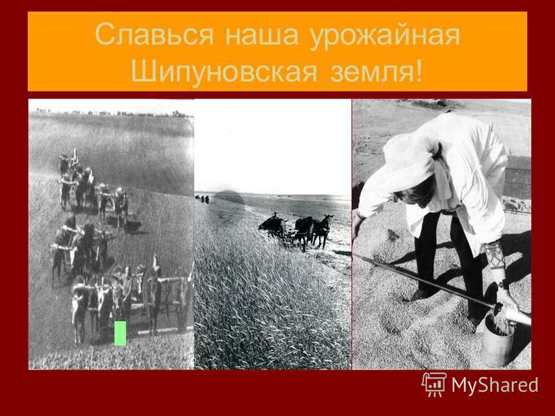 Славься наша урожайная Шипуновская земля!