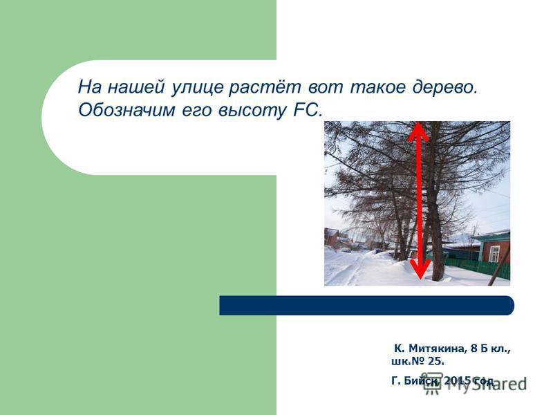К. Митякина, 8 Б кл., шк. 25. Г. Бийск, 2015 год На нашей улице растёт вот такое дерево. Обозначим его высоту FC.