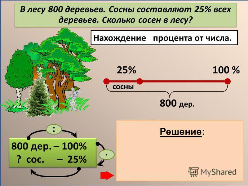 Нахождение процента от числа. 800 дер. – 100% ? сос. – 25% 800 дер. – 100% ? сос. – 25% 1) 800 : 100 = 8 (дер.) – 1% дер. 2) 8. 25 = 200 (дер.) – сосны Ответ: 200 сосен. :. Решение: В лесу 800 деревьев. Сосны составляют 25% всех деревьев. Сколько сос