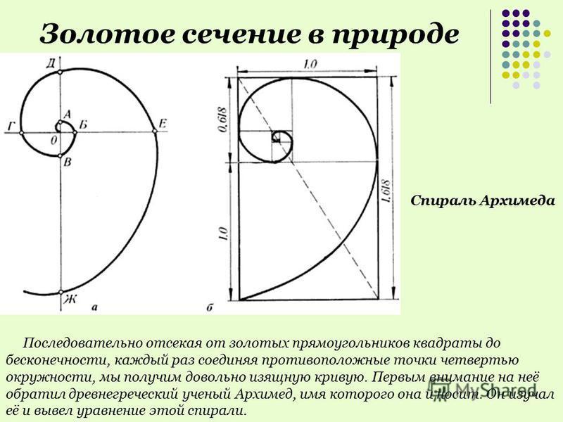 Последовательно отсекая от золотых прямоугольников квадраты до бесконечности, каждый раз соединяя противоположные точки четвертью окружности, мы получим довольно изящную кривую. Первым внимание на неё обратил древнегреческий ученый Архимед, имя котор