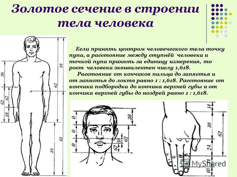 Золотое сечение в строении тела человека Если принять центром человеческого тела точку пупа, а расстояние между ступнёй человека и точкой пупа принять за единицу измерения, то рост человека эквивалентен числу 1,618. Расстояние от кончиков пальца до з