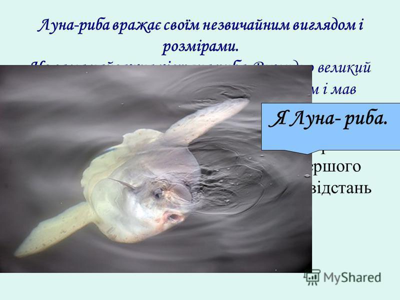 Луна-риба вражає своїм незвичайним виглядом і розмірами. Це сама найважча кістяна риба. Рекордно великий спійманий экземпляр важив … кілограм і мав довжину … м. 1) Із одного пункту в протилежних напрямах виїхали два автомобіля. Швидкість першого 75 к