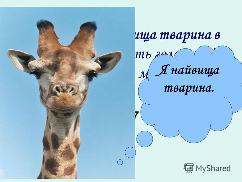 Жираф сама найвища тварина в світі. Жираф носить голову і ніс на висоті … метрів. 2,8 + х + 3,7 = 12,5 Я найвища тварина.