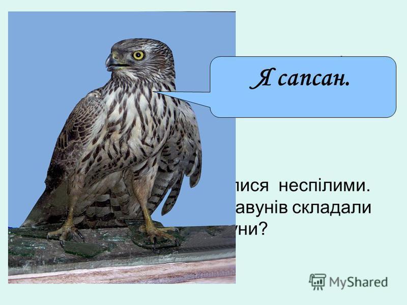 Самий остріший зір у сапсана. Він бачить голуба на відстані … км. Із 200 кавунів 16 виявилися неспілими. Скільки процентів всіх кавунів складали неспілі кавуни? Я сапсан.