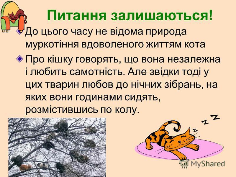 Питання залишаються! До цього часу не відома природа муркотіння вдоволеного життям кота Про кішку говорять, що вона незалежна і любить самотність. Але звідки тоді у цих тварин любов до нічних зібрань, на яких вони годинами сидять, розмістившись по ко