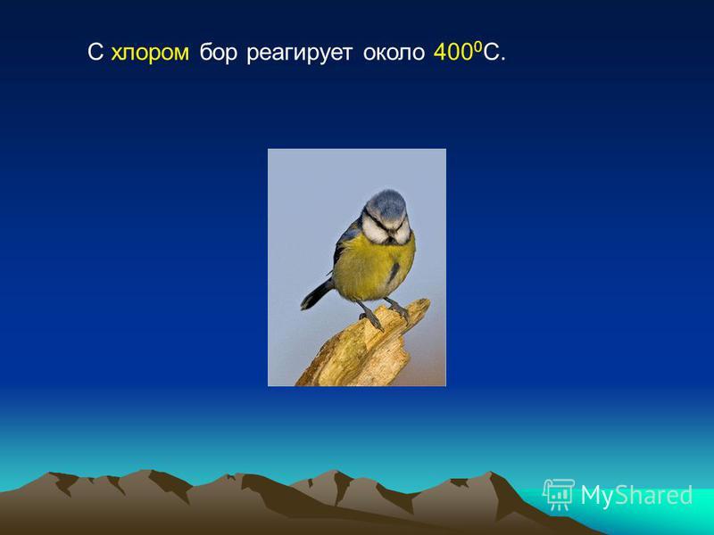 С хлором бор реагирует около 400 0 С.