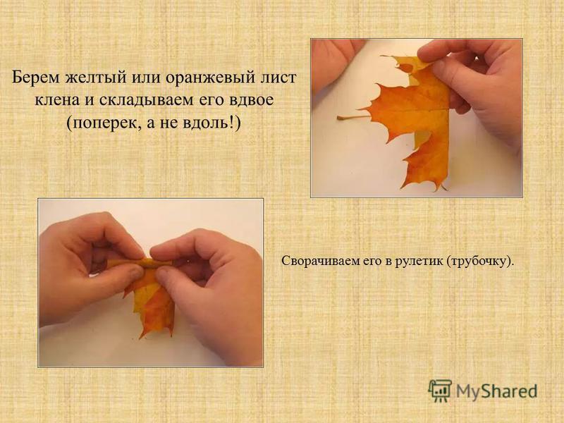 Берем желтый или оранжевый лист клена и складываем его вдвое (поперек, а не вдоль!) Сворачиваем его в рулетки (трубочку).