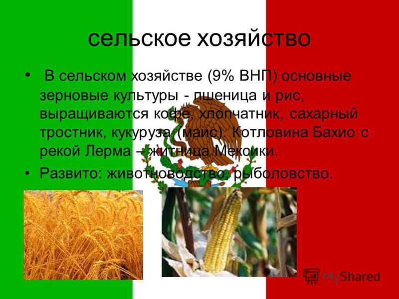 сельское хозяйство В сельском хозяйстве (9% ВНП) основные зерновые культуры - пшеница и рис, выращиваются кофе, хлопчатник, сахарный тростник, кукуруза (маис). Котловина Бахио с рекой Лерма – житница Мексики. Развито: животноводство, рыболовство.