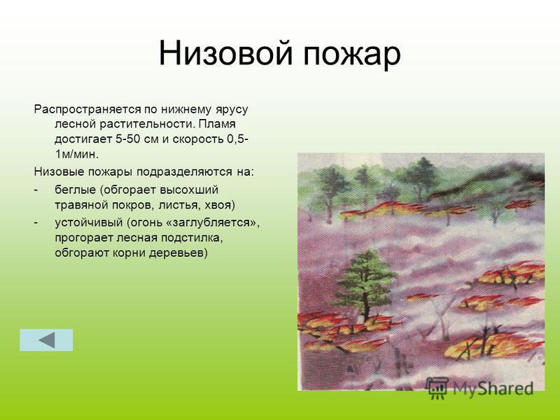 Низовой пожар Распространяется по нижнему ярусу лесной растительности. Пламя достигает 5-50 см и скорость 0,5- 1 м/мин. Низовые пожары подразделяются на: -беглые (обгорает высохший травяной покров, листья, хвоя) -устойчивый (огонь «заглубляется», про
