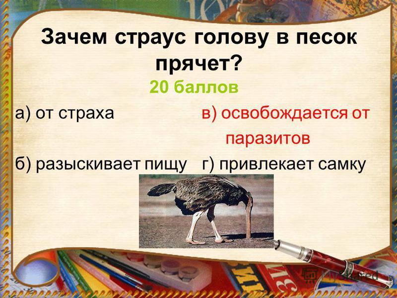 Зачем страус голову в песок прячет? 20 баллов а) от страха в) освобождается от паразитов б) разыскивает пищу г) привлекает самку