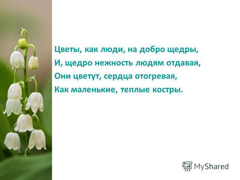 Цветы, как люди, на добро щедры, И, щедро нежность людям отдавая, Они цветут, сердца отогревая, Как маленькие, теплые костры.