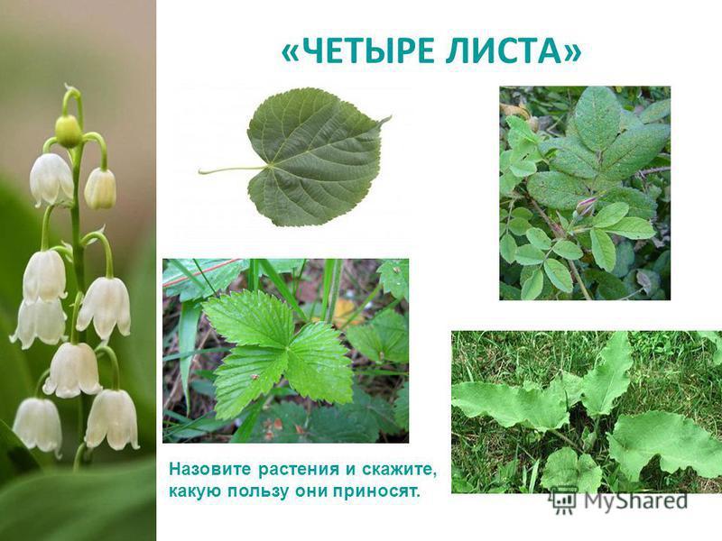 «ЧЕТЫРЕ ЛИСТА» Назовите растения и скажите, какую пользу они приносят.