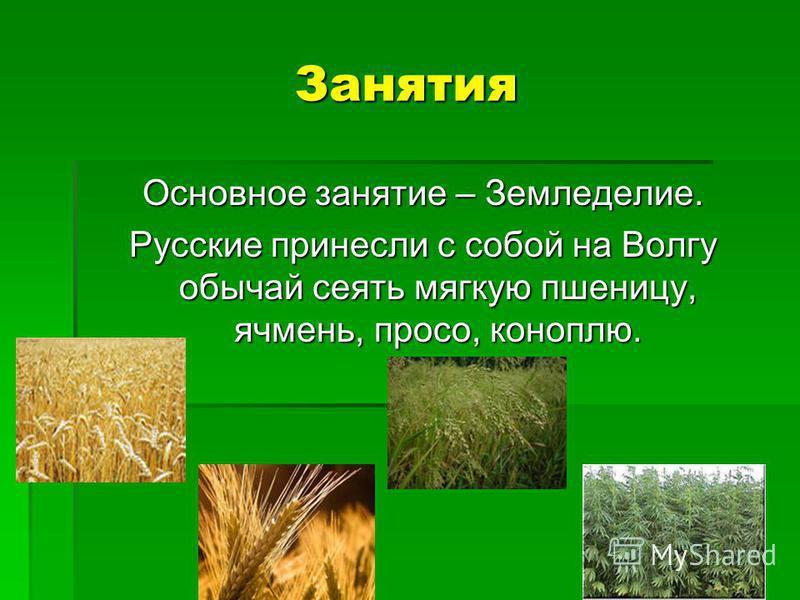 Занятия Основное занятие – Земледелие. Русские принесли с собой на Волгу обычай сеять мягкую пшеницу, ячмень, просо, коноплю.