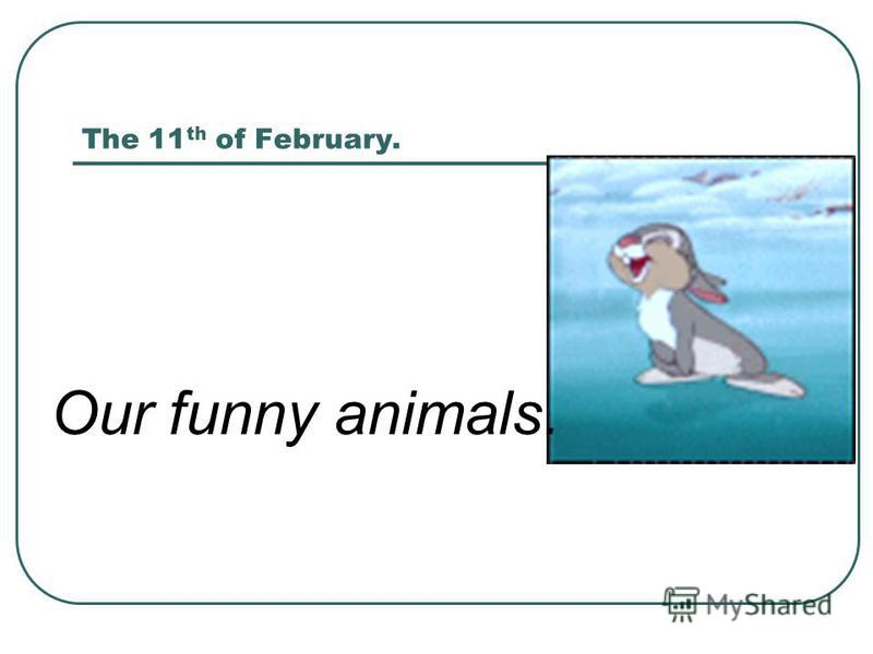 The 11 th of February. Our funny animals.