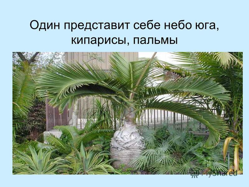 Один представит себе небо юга, кипарисы, пальмы