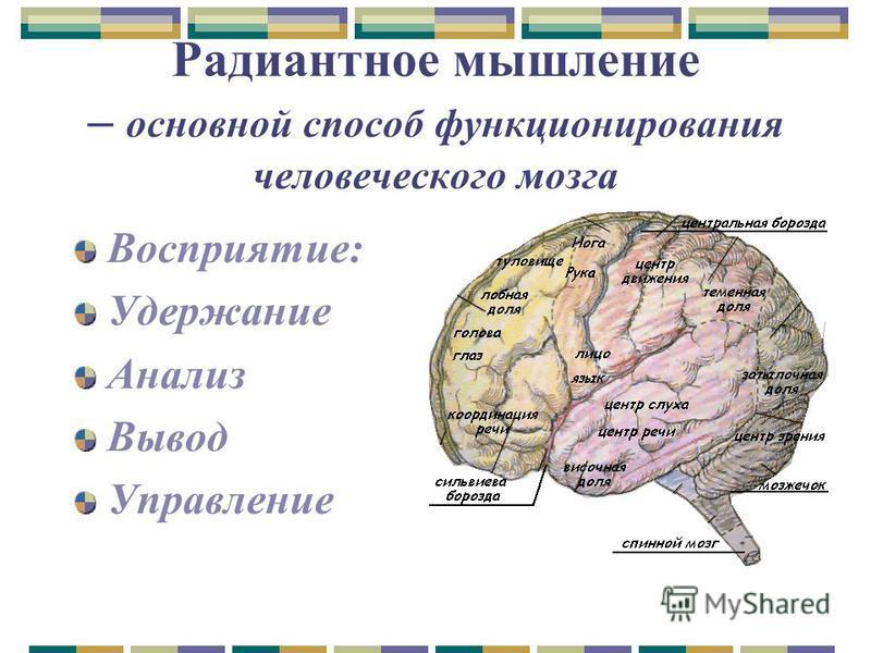 Радиантное мышление – основной способ функционирования человеческого мозга Восприятие: Удержание Анализ Вывод Управление