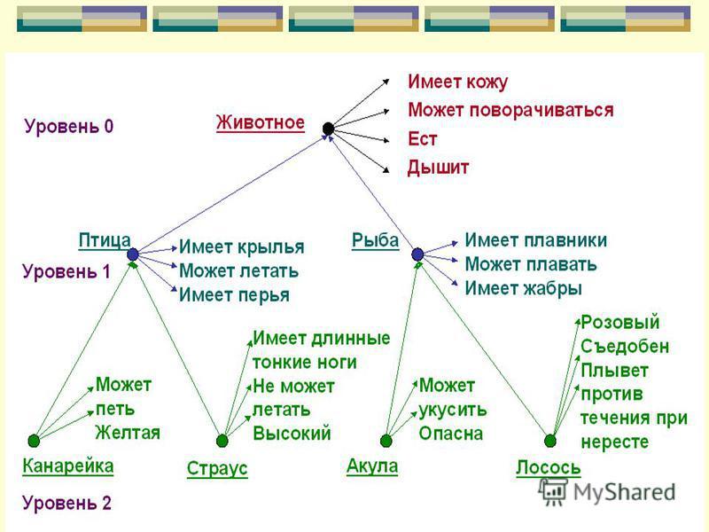 Семантиченская сеть
