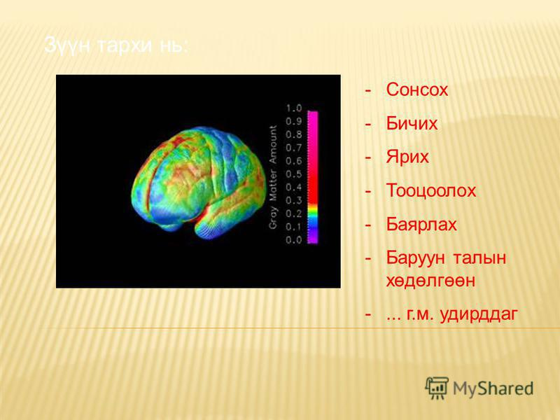Зүүн тархи нь: -Сонсох -Бичих -Ярих -Тооцоолох -Баярлах -Баруун талын хөдөлгөөн -... г.м. удирддаг